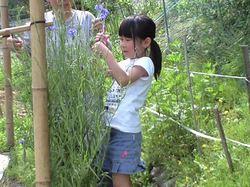 花畑で花摘み