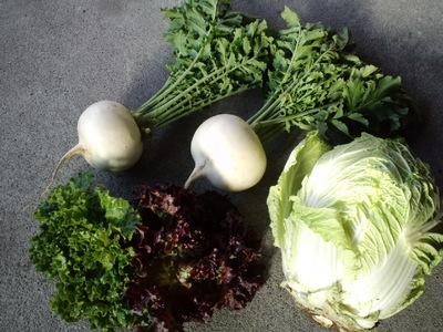 新鮮な地の野菜