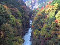 荒川の紅葉