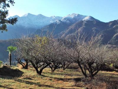 雪を被った山々