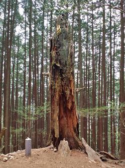 雷の落ちた木